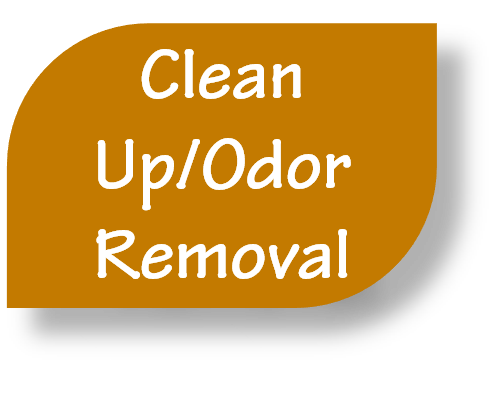 Clean Up / Odor Removal