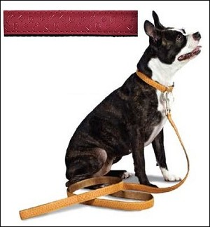 Premier Bark Avenue Flat Leash - 6' x 1""